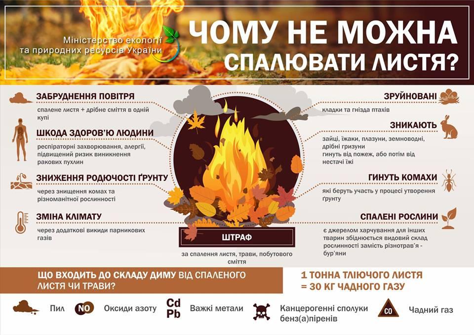 Чому не можна спалювати листя та яка є альтернатива?