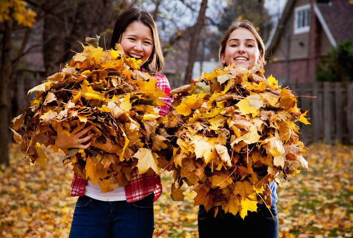 Як безкоштовно здати на міське сміттєзвалище листя?
