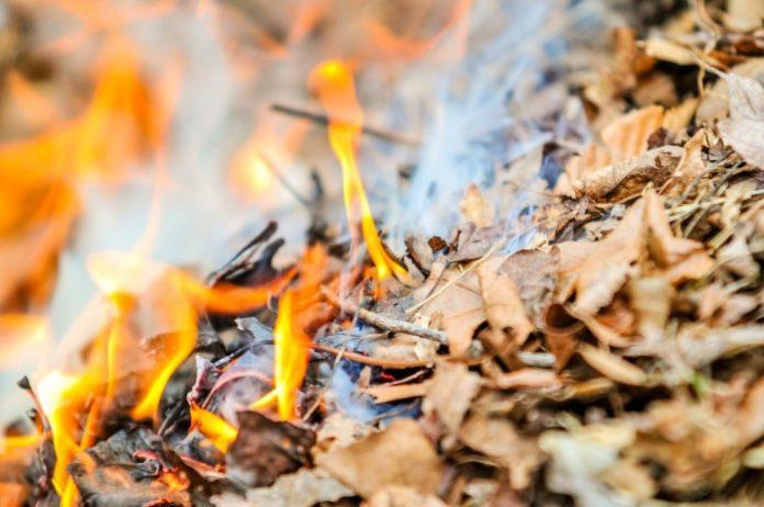 Шкода від спалювання листя та штраф та адміністративна відповідальність