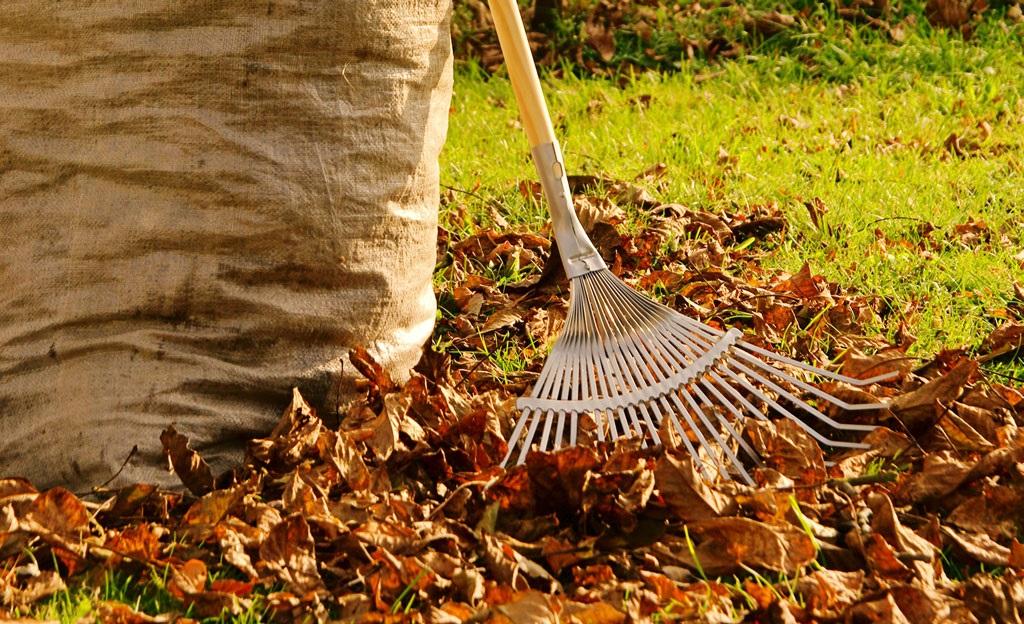 Опале листя на міське сміттєзвалище приймається безкоштовно